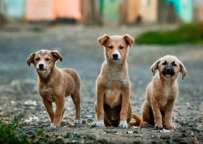 foto perros